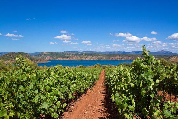 Escapades vigneronnes en Languedoc