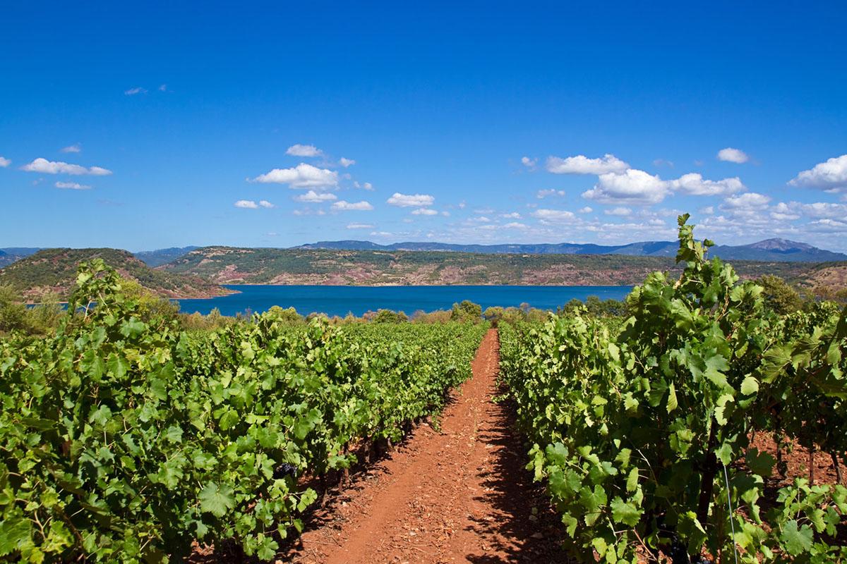 Escapades vigneronnes en Languedoc-Roussillon